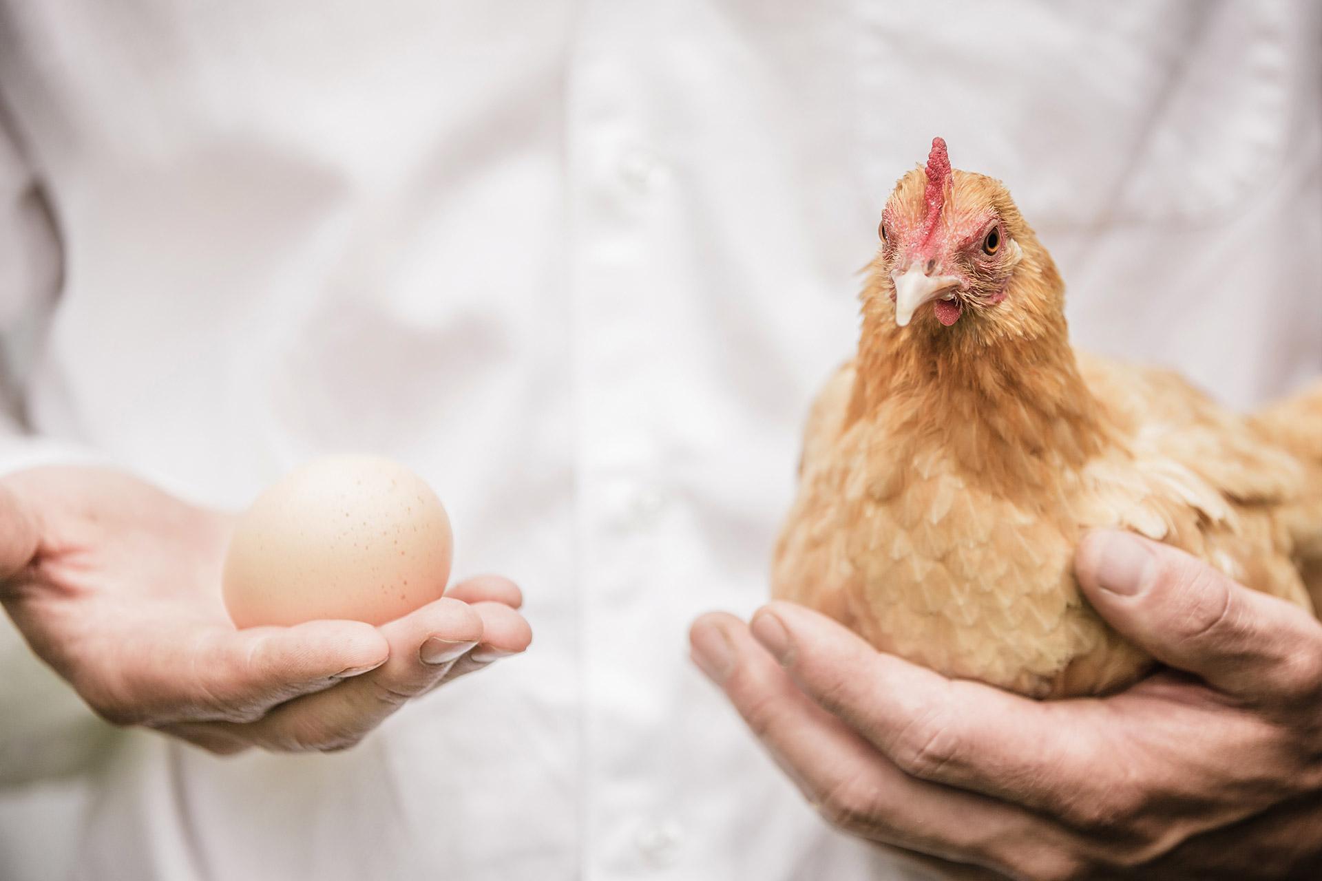 Effizienz: Westfalen schätzen Hühner, die Eier legen – und nicht Hühner, die gackern
